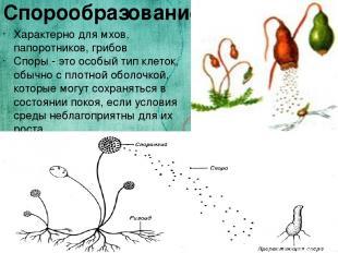 Спорообразование Характерно для мхов, папоротников, грибов Споры - это особый ти