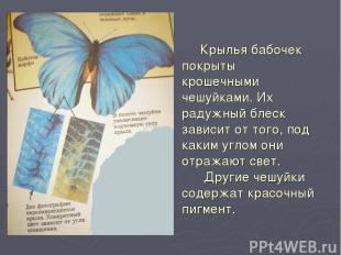 Крылья бабочек покрыты крошечными чешуйками. Их радужный блеск зависит от того,