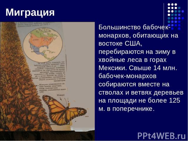Миграция Большинство бабочек-монархов, обитающих на востоке США, перебираются на зиму в хвойные леса в горах Мексики. Свыше 14 млн. бабочек-монархов собираются вместе на стволах и ветвях деревьев на площади не более 125 м. в поперечнике.