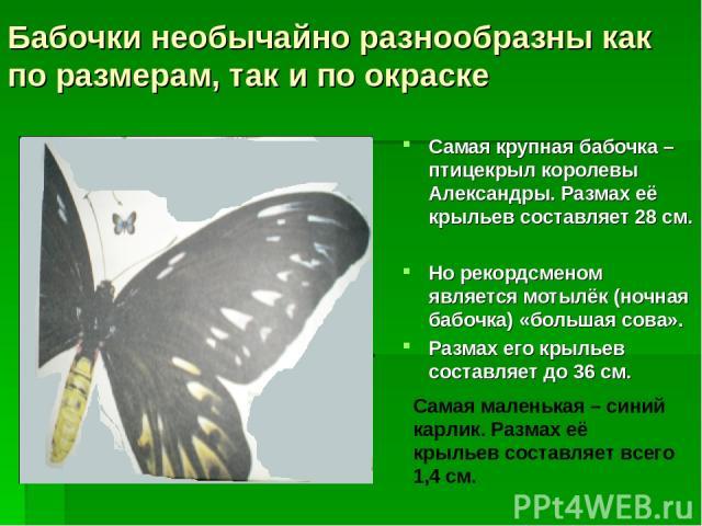 Бабочки необычайно разнообразны как по размерам, так и по окраске Самая крупная бабочка – птицекрыл королевы Александры. Размах её крыльев составляет 28 см. Но рекордсменом является мотылёк (ночная бабочка) «большая сова». Размах его крыльев составл…
