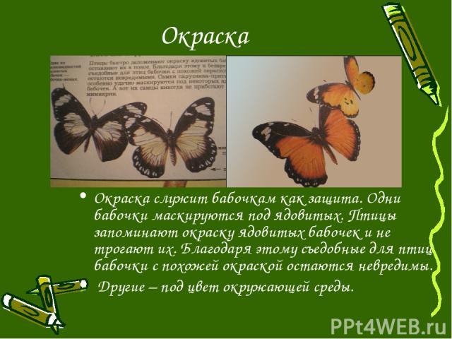 Окраска Окраска служит бабочкам как защита. Одни бабочки маскируются под ядовитых. Птицы запоминают окраску ядовитых бабочек и не трогают их. Благодаря этому съедобные для птиц бабочки с похожей окраской остаются невредимы. Другие – под цвет окружаю…