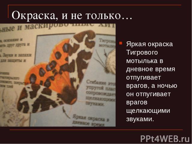 Окраска, и не только… Яркая окраска Тигрового мотылька в дневное время отпугивает врагов, а ночью он отпугивает врагов щелкающими звуками.