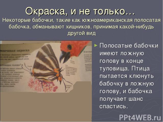 Окраска, и не только… Некоторые бабочки, такие как южноамериканская полосатая бабочка, обманывают хищников, принимая какой-нибудь другой вид Полосатые бабочки имеют ложную голову в конце туловища. Птица пытается клюнуть бабочку в ложную голову, и ба…