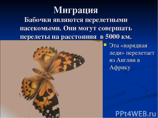 Миграция Бабочки являются перелетными насекомыми. Они могут совершать перелеты на расстояния в 5000 км. Эта «нарядная леди» перелетает из Англии в Африку