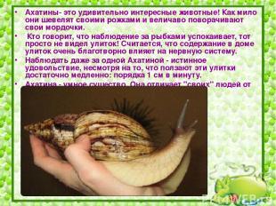 Ахатины- это удивительно интересные животные! Как мило они шевелят своими рожкам