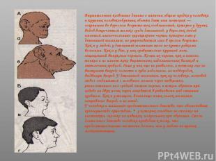 Внушительные косвенные данные о наличии общего предка у человека и крупных челов