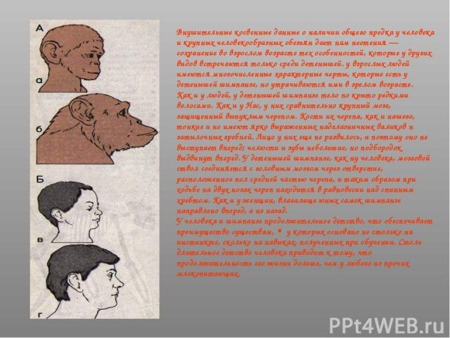 Внушительные косвенные данные о наличии общего предка у человека и крупных человекообразных обезьян дает нам неотения — сохранение во взрослом возрасте тех особенностей, которые у других видов встречаются только среди детенышей. у взрослых людей име…