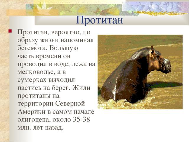 Протитан Протитан, вероятно, по образу жизни напоминал бегемота. Большую часть времени он проводил в воде, лежа на мелководье, а в сумерках выходил пастись на берег. Жили протитаны на территории Северной Америки в самом начале олигоцена, около 35-38…