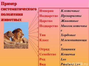 Пример систематического положения животных Империя Клеточные Надцарство Прокарио