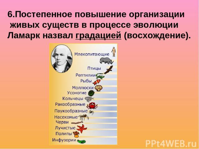 6.Постепенное повышение организации живых существ в процессе эволюции Ламарк назвал градацией (восхождение).