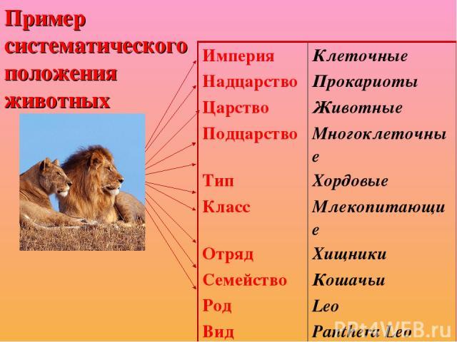 Пример систематического положения животных Империя Клеточные Надцарство Прокариоты Царство Животные Подцарство Многоклеточные Тип Хордовые Класс Млекопитающие Отряд Хищники Семейство Кошачьи Род Leo Вид Panthera Leo
