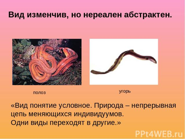 Вид изменчив, но нереален абстрактен. полоз угорь «Вид понятие условное. Природа – непрерывная цепь меняющихся индивидуумов. Одни виды переходят в другие.»