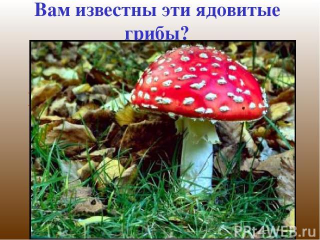 Вам известны эти ядовитые грибы? Какие ядовитые грибы, кроме показанных, вам известны?