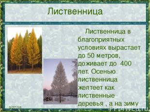 Лиственница Лиственница в благоприятных условиях вырастает до 50 метров, доживае