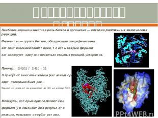 Каталитическая функция. (ферментативная) Наиболее хорошо известная роль белков в