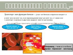 Транспортная функция. Транспортная функция белков — участие белков в переносе ве