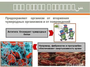 Защитная функция. Предохраняют организм от вторжения чужеродных организмов и от