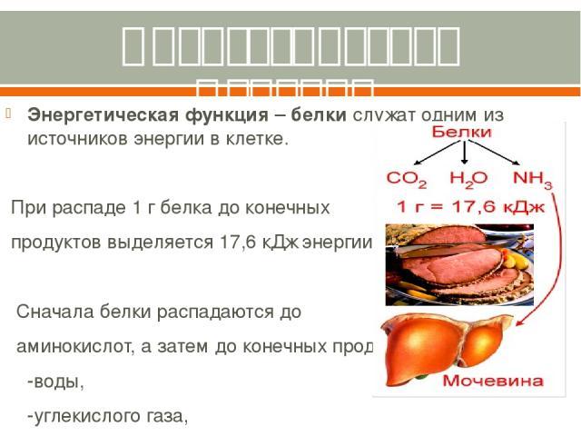 Энергетическая функция. Энергетическаяфункция–белкислужат одним из источников энергии вклетке. При распаде 1 г белка до конечных продуктов выделяется 17,6 кДж энергии. Сначала белки распадаются до аминокислот, а затем до конечных продуктов: -во…