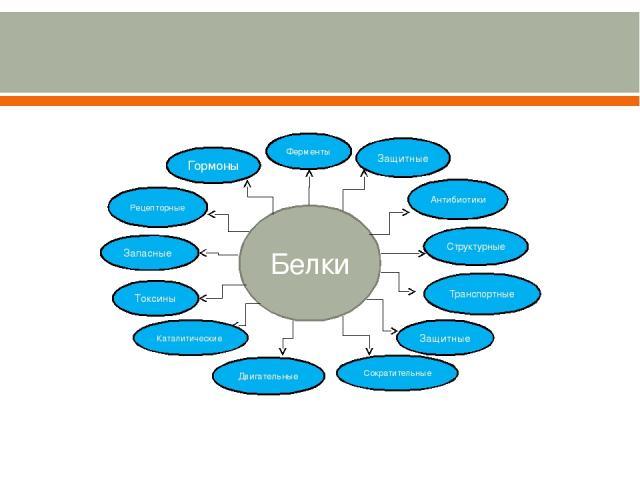 Белки Ферменты Защитные Антибиотики Структурные Двигательные Защитные Токсины Запасные Рецепторные Гормоны Каталитические Транспортные Сократительные