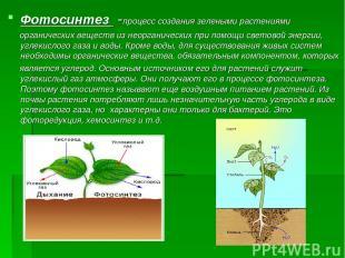 Фотосинтез -процесс создания зелеными растениями органических веществ из неорган