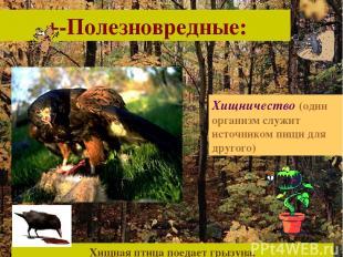 +-Полезновредные: Хищничество (один организм служит источником пищи для другого)