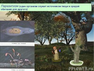 Паразитизм (один организм служит источником пищи и средой обитания для другого)