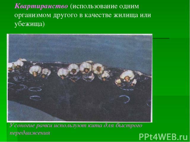 Квартиранство (использование одним организмом другого в качестве жилища или убежища) Усоногие рачки используют кита для быстрого передвижения