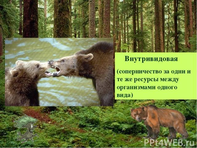Внутривидовая (соперничество за одни и те же ресурсы между организмами одного вида)