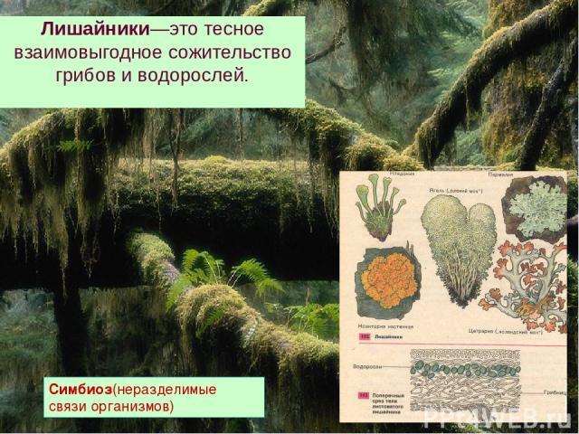 Лишайники—это тесное взаимовыгодное сожительство грибов и водорослей. Симбиоз(неразделимые связи организмов)