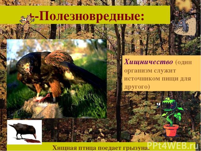 +-Полезновредные: Хищничество (один организм служит источником пищи для другого) Хищная птица поедает грызуна.
