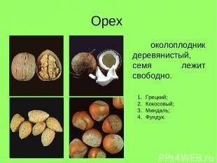 Орех околоплодник деревянистый, семя лежит свободно. Грецкий; Кокосовый; Миндаль