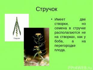 Стручок Имеет две створки, но семена в стручке располагаются не на створках, как