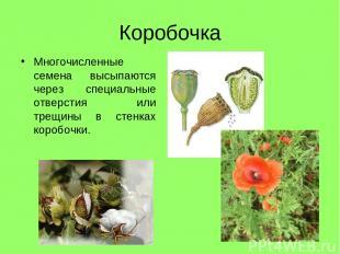 Коробочка Многочисленные семена высыпаются через специальные отверстия или трещи