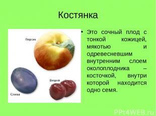 Костянка Это сочный плод с тонкой кожицей, мякотью и одревесневшим внутренним сл