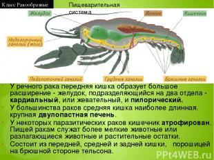 Паукообразные Членистоногие Ракообразные Насекомые