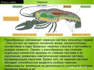 Отряд Бабочки, или Чешуекрылые назван так потому, что крылья бабочек покрыты мел