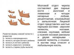 Мозговой отдел черепа составляют две парные кости - височная и теменная и четыре