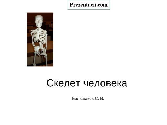 Скелет человека Большаков С. В. Prezentacii.com