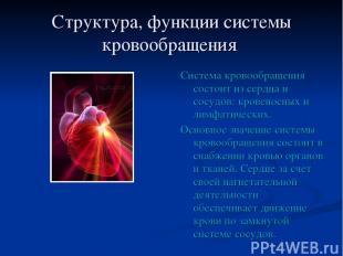 Структура, функции системы кровообращения Система кровообращения состоит из серд