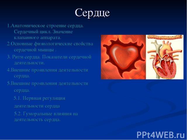 Сердце 1.Анатомическое строение сердца. Сердечный цикл. Значение клапанного аппарата. 2.Основные физиологические свойства сердечной мышцы . 3. Ритм сердца. Показатели сердечной деятельности. 4.Внешние проявления деятельности сердца. 5.Внешние проявл…