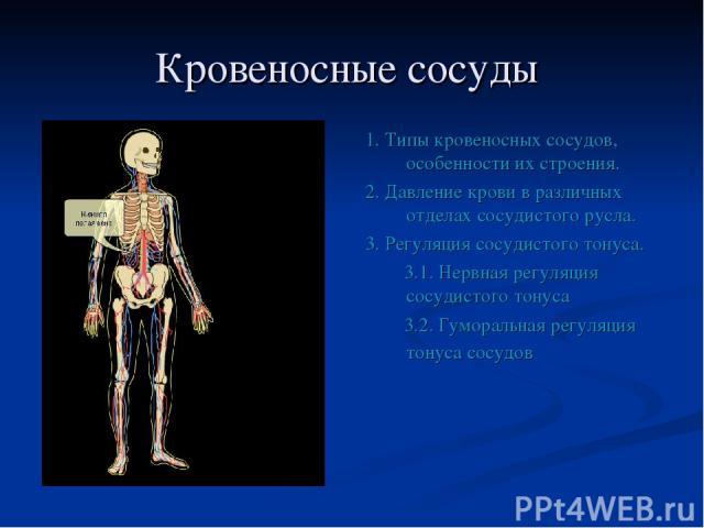 Кровеносные сосуды 1. Типы кровеносных сосудов, особенности их строения. 2. Давление крови в различных отделах сосудистого русла. 3. Регуляция сосудистого тонуса. 3.1. Нервная регуляция сосудистого тонуса 3.2. Гуморальная регуляция тонуса сосудов