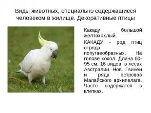 Виды животных, специально содержащиеся человеком в жилище. Декоративные птицы Ка