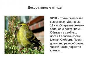 Декоративные птицы ЧИЖ - птица семейства вьюрковых. Длина ок. 12 см. Оперение же
