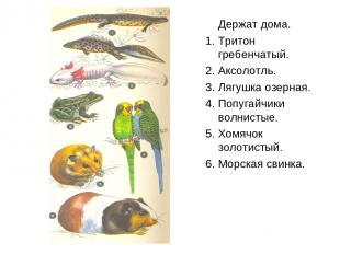 Держат дома. 1. Тритон гребенчатый. 2. Аксолотль. 3. Лягушка озерная. 4. Попугай