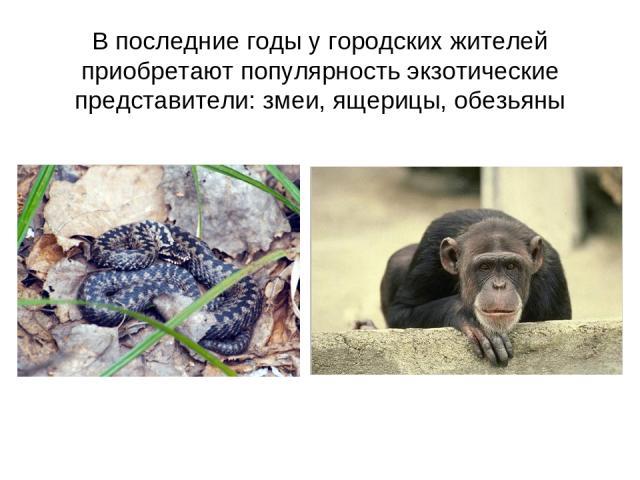 В последние годы у городских жителей приобретают популярность экзотические представители: змеи, ящерицы, обезьяны