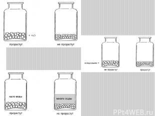 Потребность в воде для прорастания у семян различных растений (% к собственной м