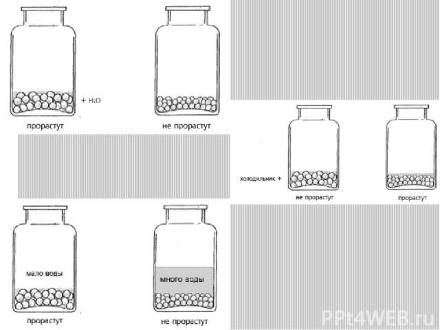 Потребность в воде для прорастания у семян различных растений (% к собственной массе)