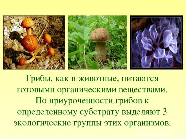 Грибы, как и животные, питаются готовыми органическими веществами. По приуроченности грибов к определенному субстрату выделяют 3 экологические группы этих организмов.