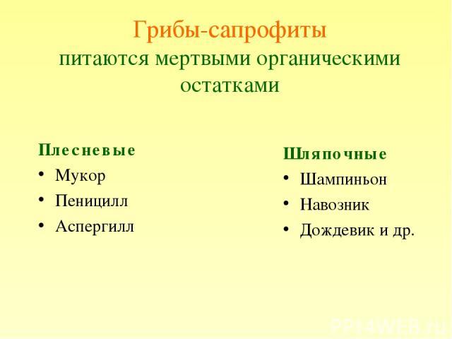 Грибы-сапрофиты питаются мертвыми органическими остатками Плесневые Мукор Пеницилл Аспергилл Шляпочные Шампиньон Навозник Дождевик и др.