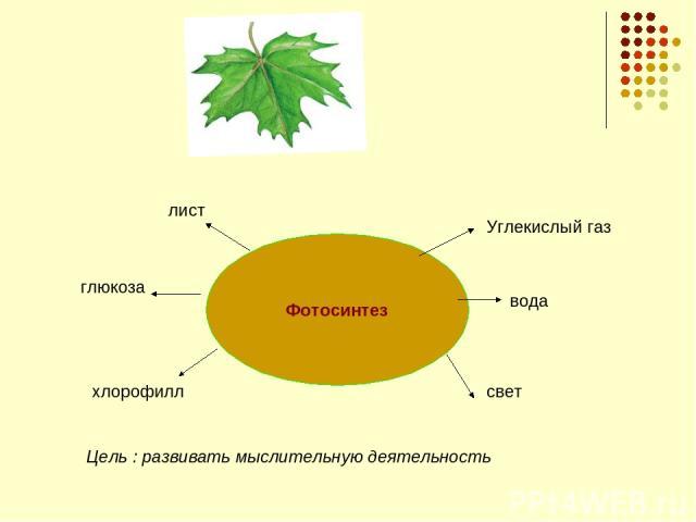 Фотосинтез глюкоза лист Углекислый газ вода свет хлорофилл Цель : развивать мыслительную деятельность